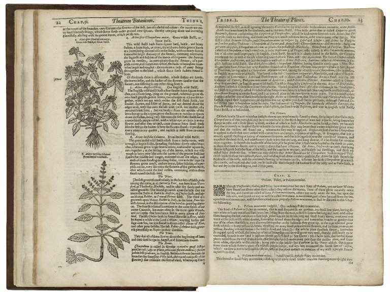 Theatrum botanicum: The theater of plants.