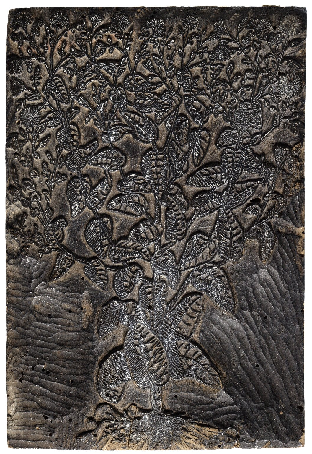 "Woodblock for ""Lactuca florescens"""