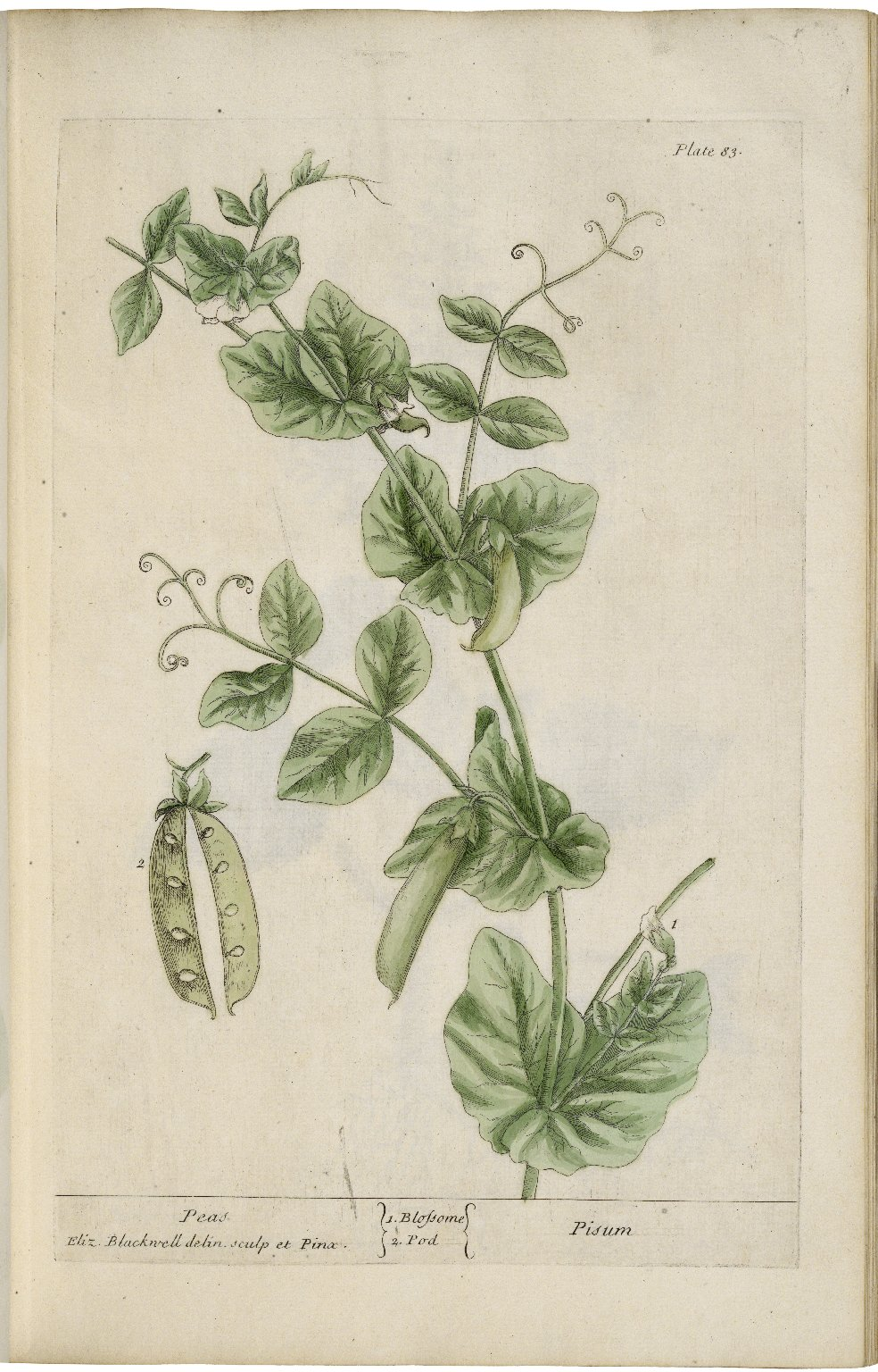 A curious herbal, containing five hundred cuts, of the most useful plants ...