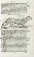 The historie of foure-footed beastes…