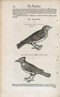 ...Historiae animalium...
