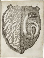 A most certaine and true relation of a strange monster or serpent found in the left ventricle of the heart of Iohn Pennant...