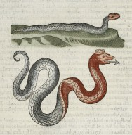 The historie of serpents...