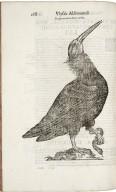 ...Ornithologiae hoc est de avibus historiae libri XII...