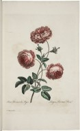 The British herbal, containing one hundred plates of the most beautiful and scarce flowers and useful medicinal plants which blow in the open air of Great Britain...