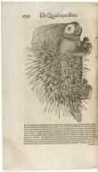 [De quadrupedibus viviparis] Conradi Gesneri medici Tigurini Historiae animalium lib. I. de quadrupedibus uiuiparis ...