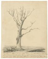 Herne's oak [graphic].
