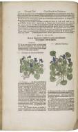 Cruydt-boeck / van Rembertus Dodonaeus; volgens sijne laetste verbeteringe ; met biivoegsels achter elck capittel, wt verscheyden cruydtbeschrijvers ; item in't laetste een beschrijvinge vande ...