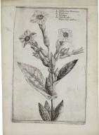 [Hortus floridus. English] A garden of flovvers ...