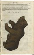The historie of foure-footed beastes.