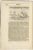 A relation of some yeares trauaile, begunne anno 1626. Into Afrique and the greater Asia, especially the territories of the Persian monarchie: and some parts of the orientall Indies, and iles adiacent. Of their religion, language, habit, discent, ceremoni