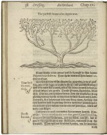 A nevv orchard and garden. Or The best way for planting, grafting, and to make any ground good, for a rich orchard: particularly in the north parts of England: generally for the whole kingdome, as in nature, reason, scituation, and all probability, may an