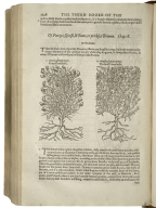 The herball, or, Generall historie of plantes / gathered by Iohn Gerarde of London, Master in Chirurgerie.