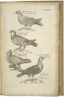 Francisci Willughbeii de Middleton in agro Warwicensi, Armigeri, e Regia Societate, Ornothologiae libri tres