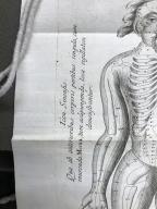 Wilhelmi ten Rhyne M.D. &c. Transisalano-Daventriensis Dissertatio de arthritide : mantissa schematica: de acupunctura: et orationes tres, I. De Chymiae ac botaniae antiquitate & dignitate. II. De physiognomia: III. De monstris. Singula ipsius authoris motis illustrata.