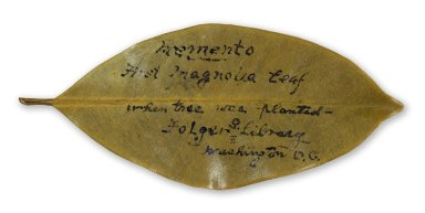Magnolia Leaf from 1932-3 with inscription.