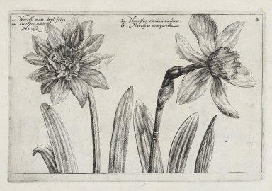 [Hortus floridus] A garden of flovvers ...