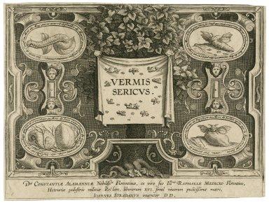 Vermis sericus [graphic] / Ioannes Stradanus, inuentor ; [Karel van Mallery].