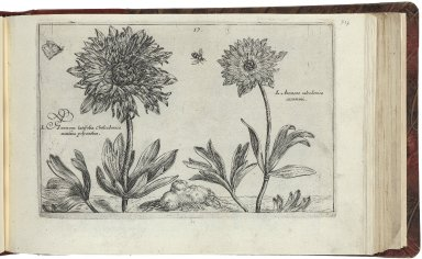 A garden of flovvers, vvherein very liuely is contained a true and perfect discription of al the flovvers contained in these foure followinge bookes. As also the perfect true manner of colouringe the same vvith theire naturall coloures . . . All vvhich to