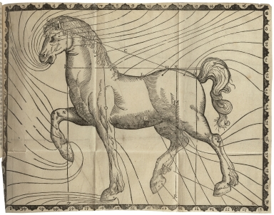 Markhams maister-peece· : Contayning all knowledge belonging to the smith, farrier, or horse-leech, touching the curing of all diseases in horses: drawne with great paine, and most approved experience, from the publicke practise of all the forraine horse-mar