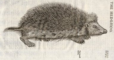 The historie of foure-footed beastes...