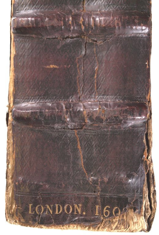 Spine (detail), STC 2188.