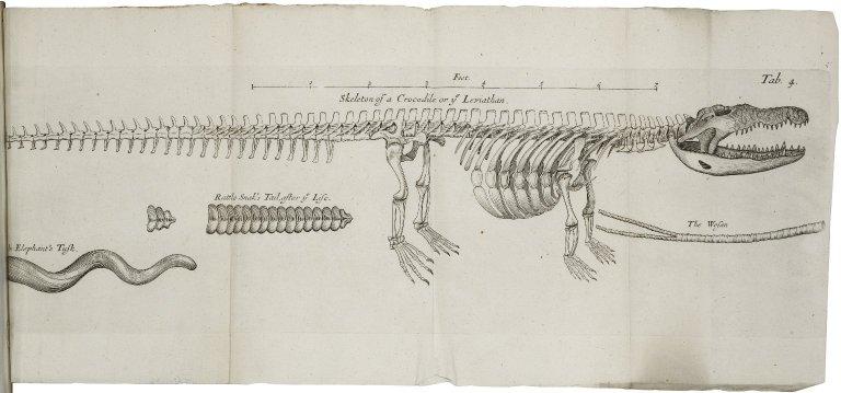 Musaeum Regalis Societatis. Or a catalogue & description of the natural and artificial rarities belonging to the Royal Society...