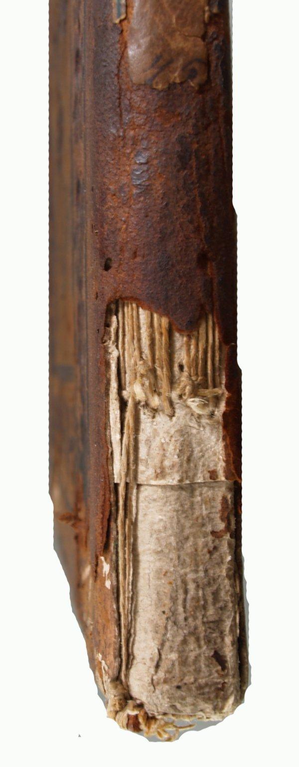 Spine (detail), INC M8 copy 2.