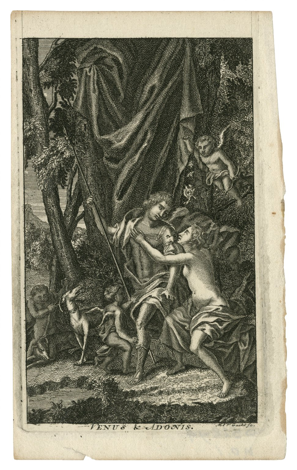 Venus & Adonis [graphic] / M.Vdr. Gucht, sc.