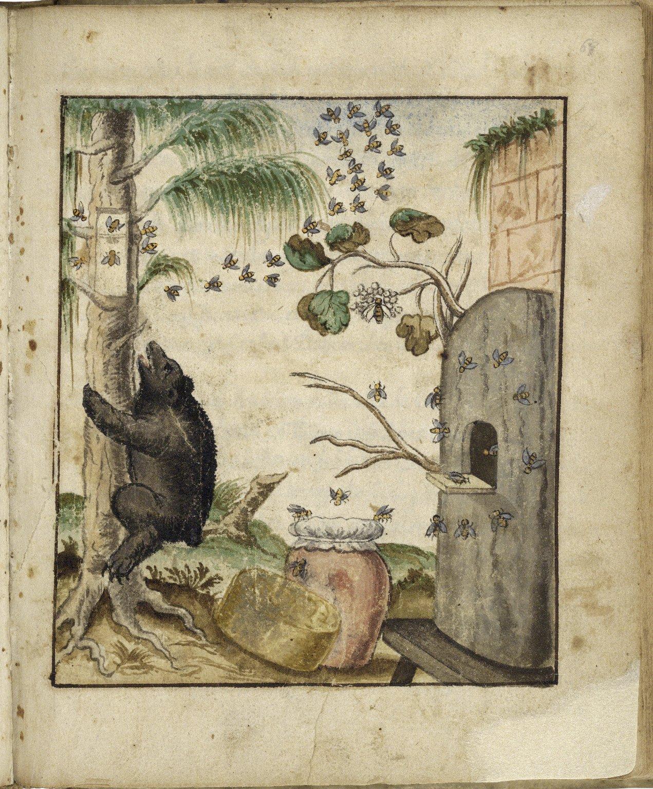 Herbarium, continens Theriaca medicamenta quae primum Andromachus, Neronis imperatoris medicus, deinceps Galenus, Dioscorides et alii medici composuerunt. [manuscript].