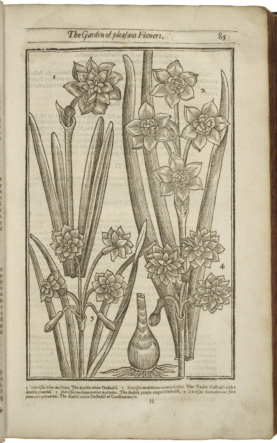 Paradisi in sole paradisus terrestris. or A garden of all sorts of pleasant flowers which our English ayre will permitt to be noursed vp: with a kitchen garden of all manner of herbes, rootes, & fruites, for meate or sause vsed with vs, and an orchard of