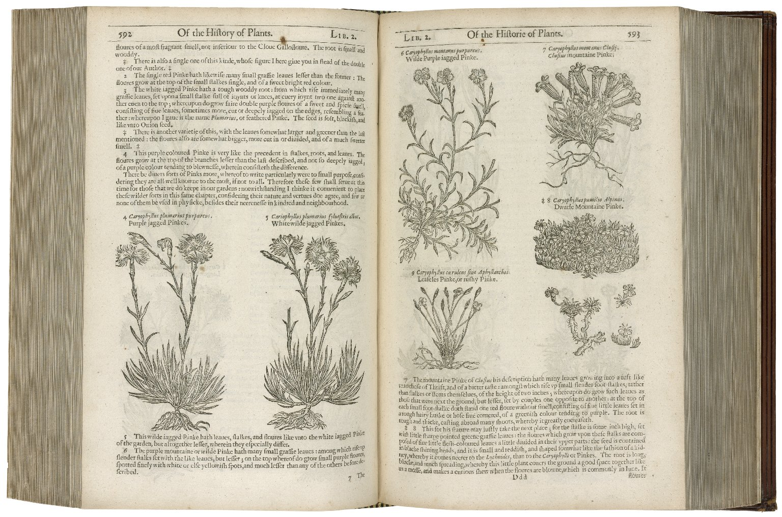The herball or Generall historie of plantes.