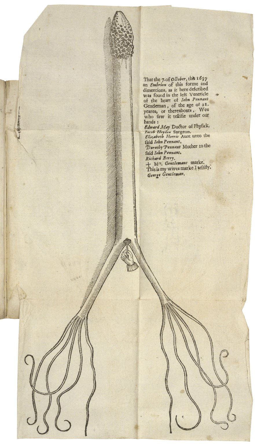 A most certaine and true relation of a strange monster or serpent found in the left ventricle of the heart of Iohn Pennant, Gentleman, of the age of 21. yeares. By Edward May Doctor of Philosophy and Physick, and professor elect of them, in the colledge o