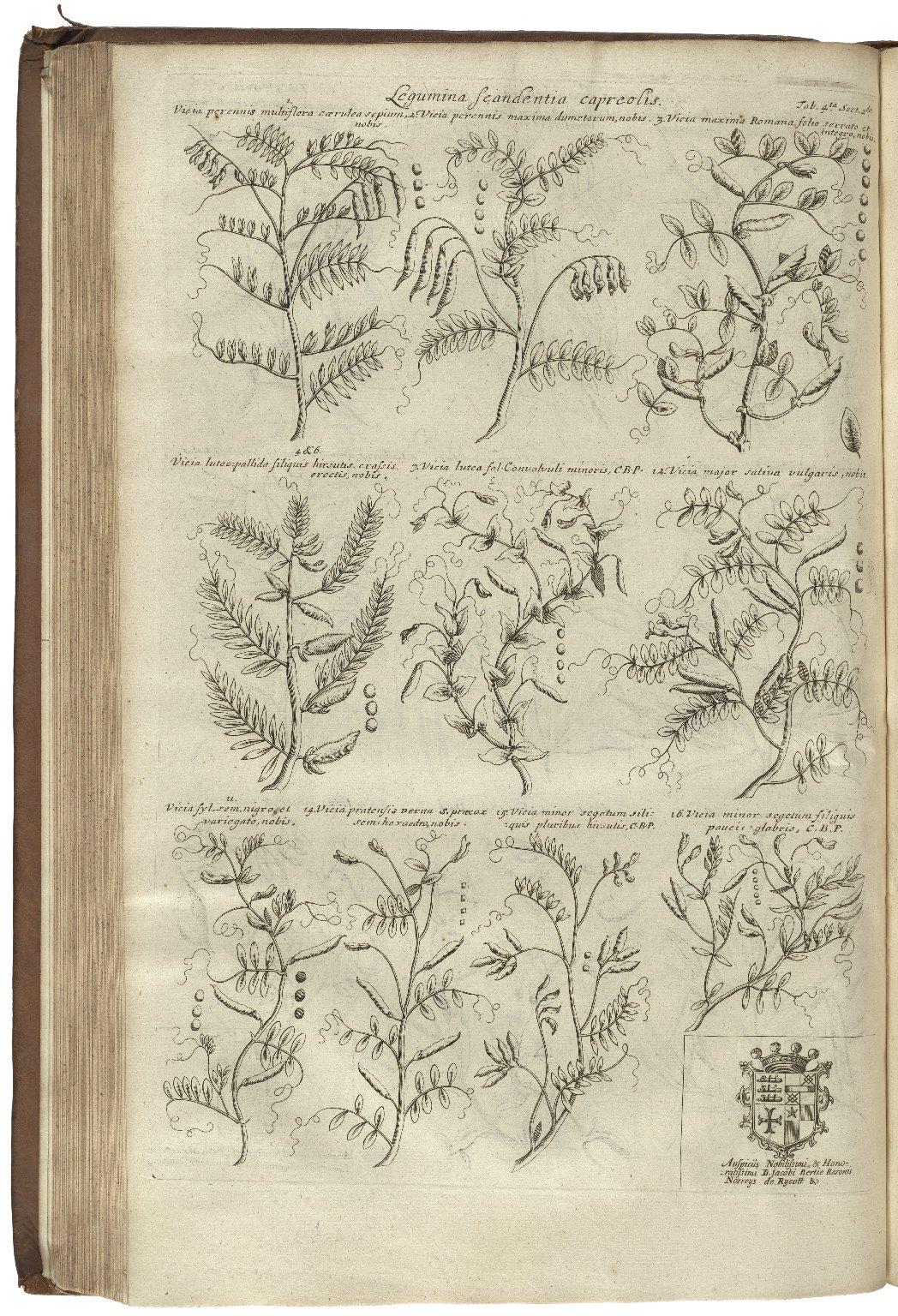 Plantarum historiæ universalis Oxoniensis...